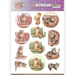 (SB10382)3D Pushout - Amy Design - Cats World - Show Cats