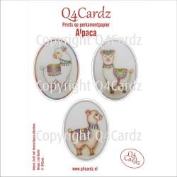 Q4Cardz Prints – Alpaca Perkamentpapier