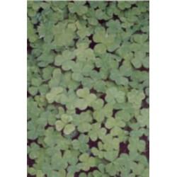 Pergamano vellum clover (1S) (61708)