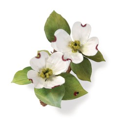 (658405)Thinlits Die Set 5PK - Flower, Dogwood