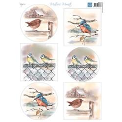(MB0197)Mattie's mooiste Birds in winter